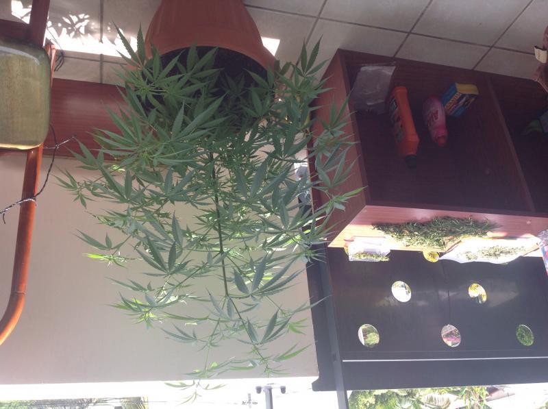 Besoin avis d 39 expert culture indoor cannabis psychoactif for Installation cannabis interieur