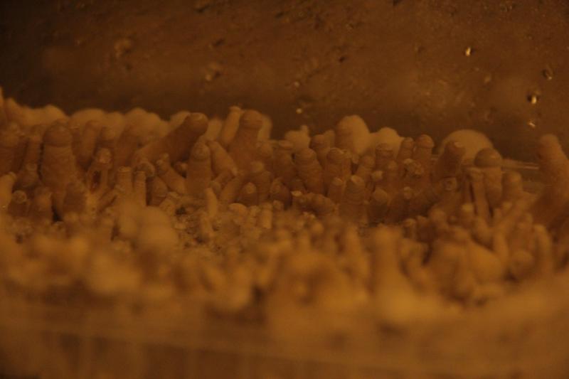 Mousse Blanche Sur Decors Aquarium